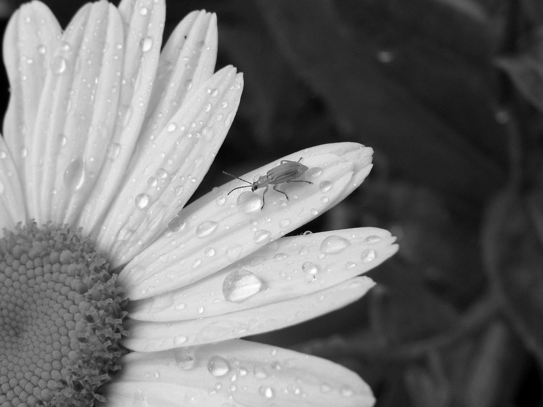 2012-09-29_BugFlower