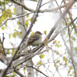 2015-05-14_bird-seacaves_bird