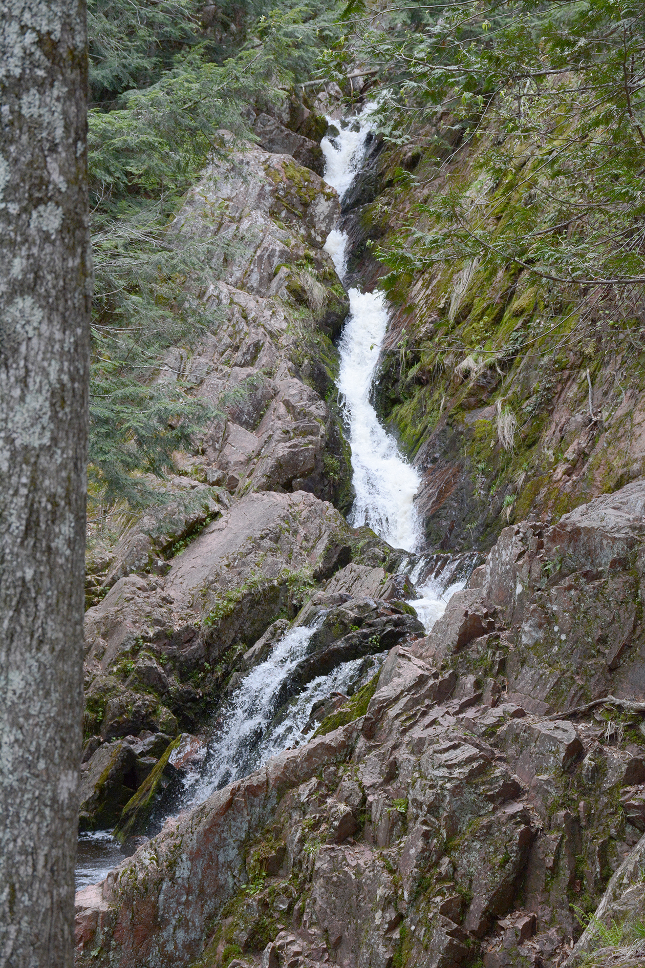 2015-05-14_bird_morganfalls-falls2