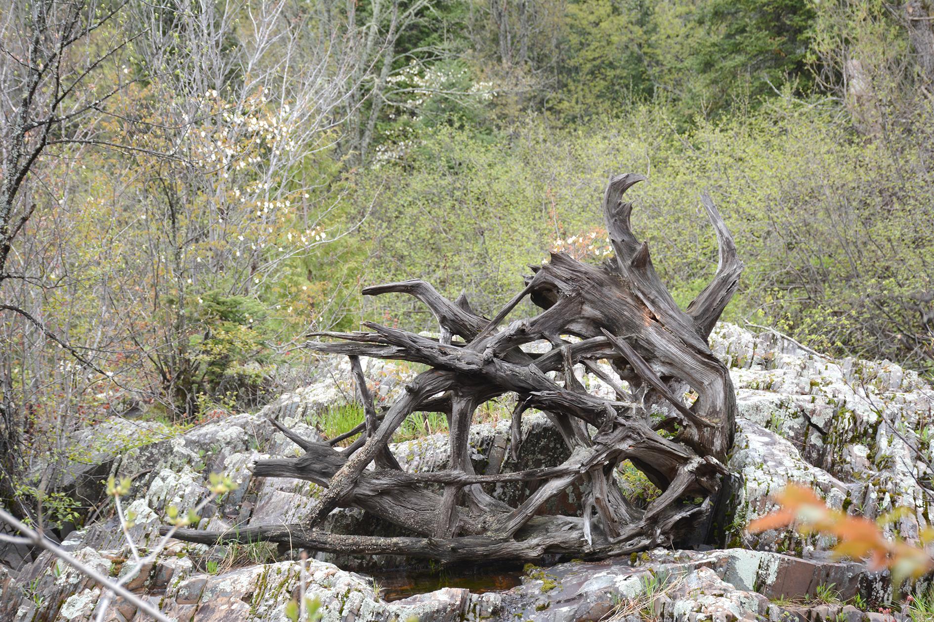 2015-05-15_bird_penokee-tylerforks-driftwood