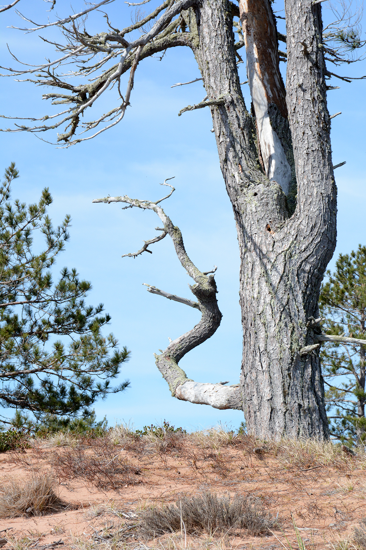 2015-05-16_stocktonisland_tree-beach