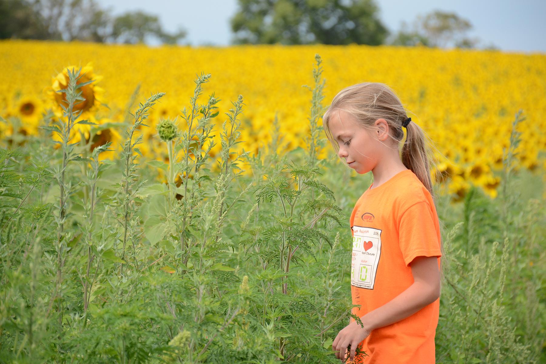 2015-08-07_Sunflower10