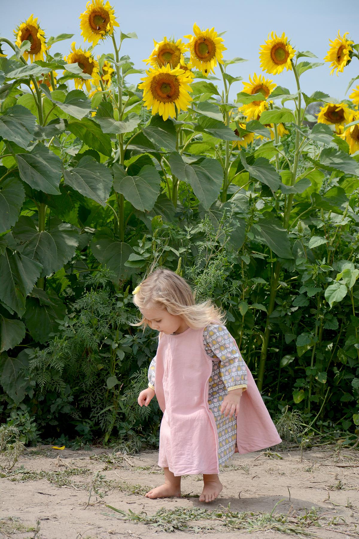 2015-08-07_Sunflower8