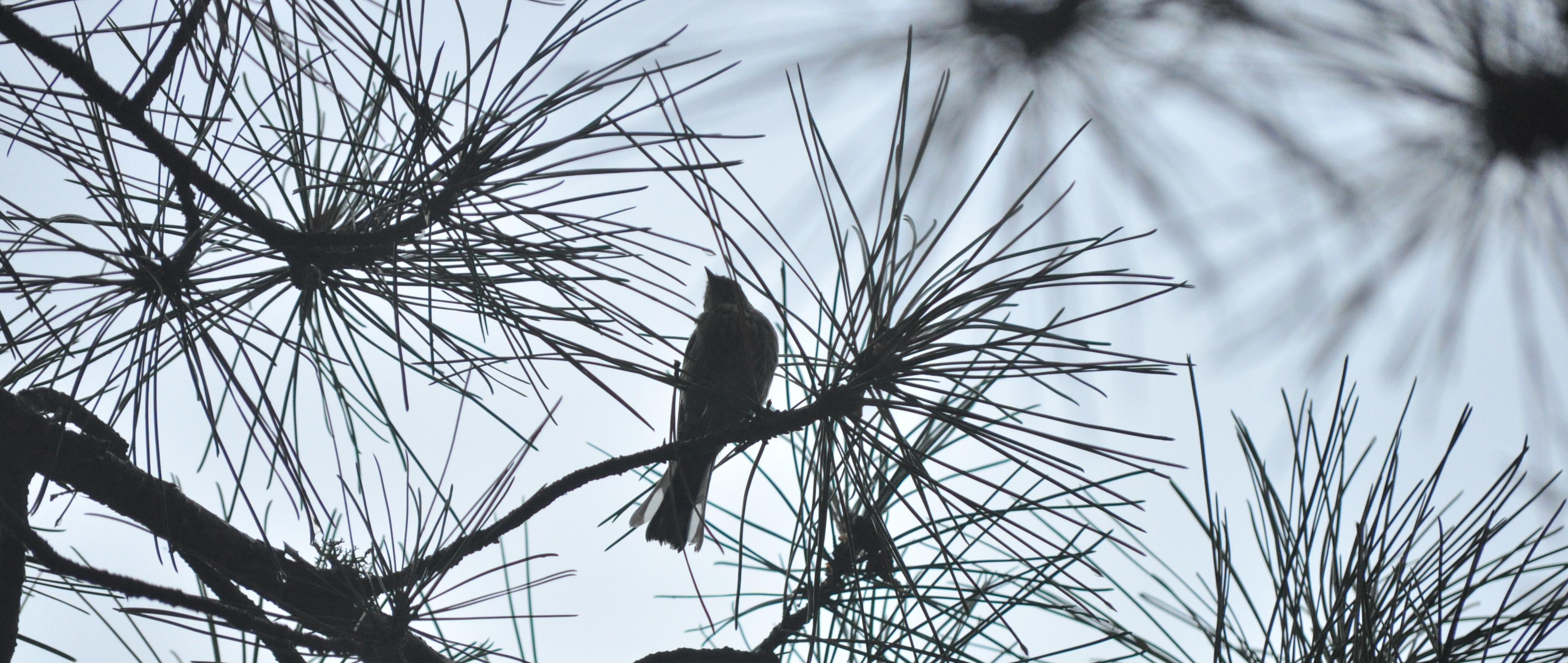 2015-09-07_upnorth-bird