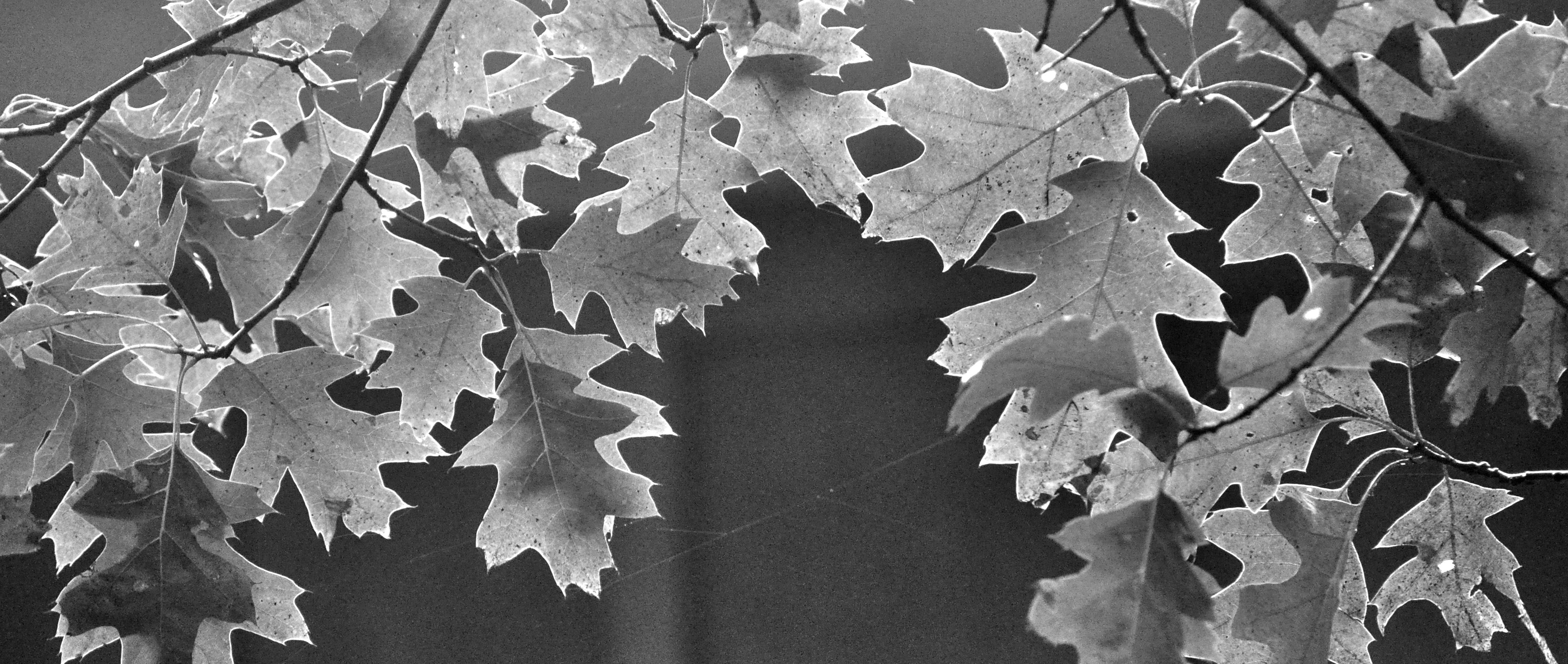 2015-09-07_upnorth-leaves