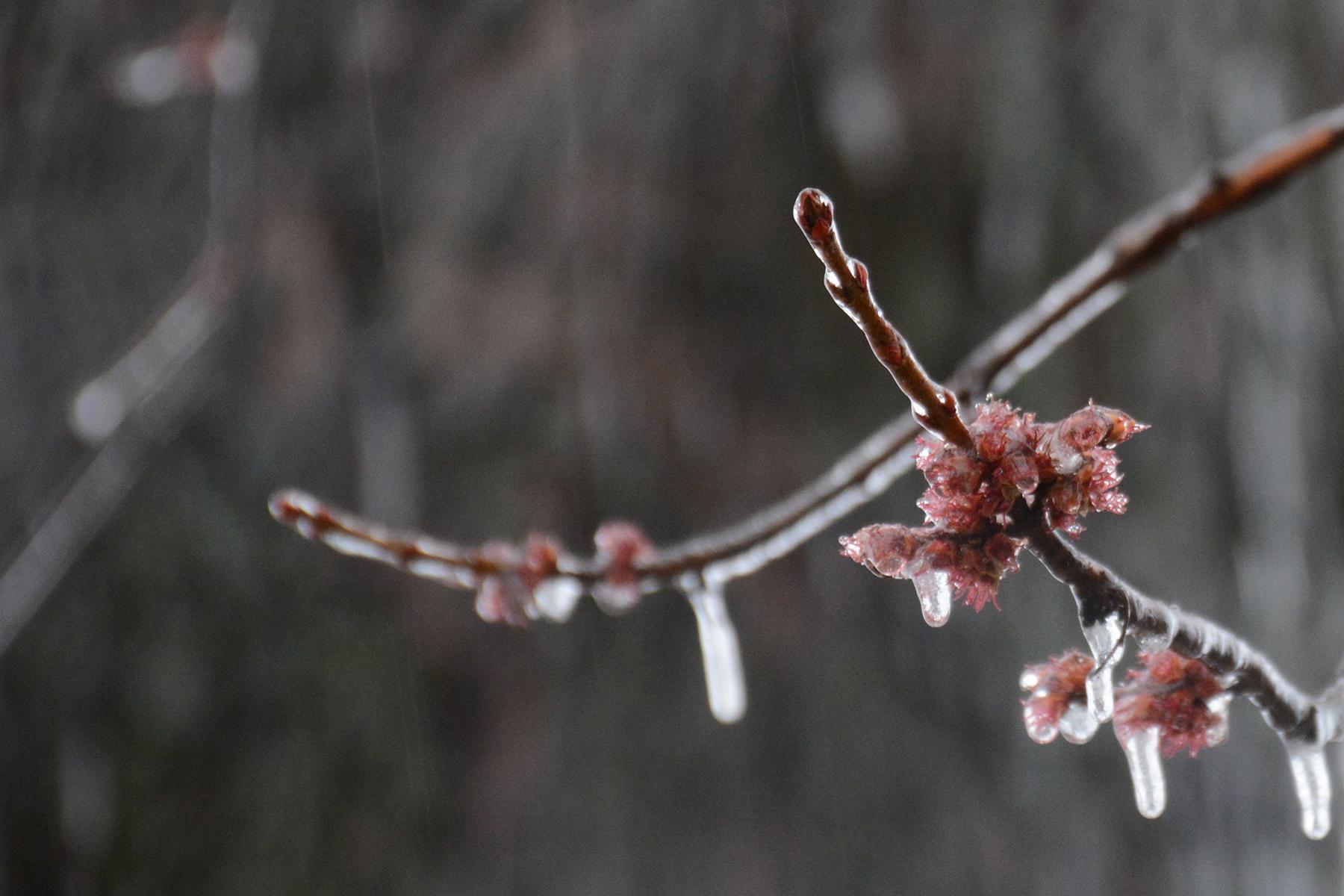 2016-03-24_backyard-ice-bud