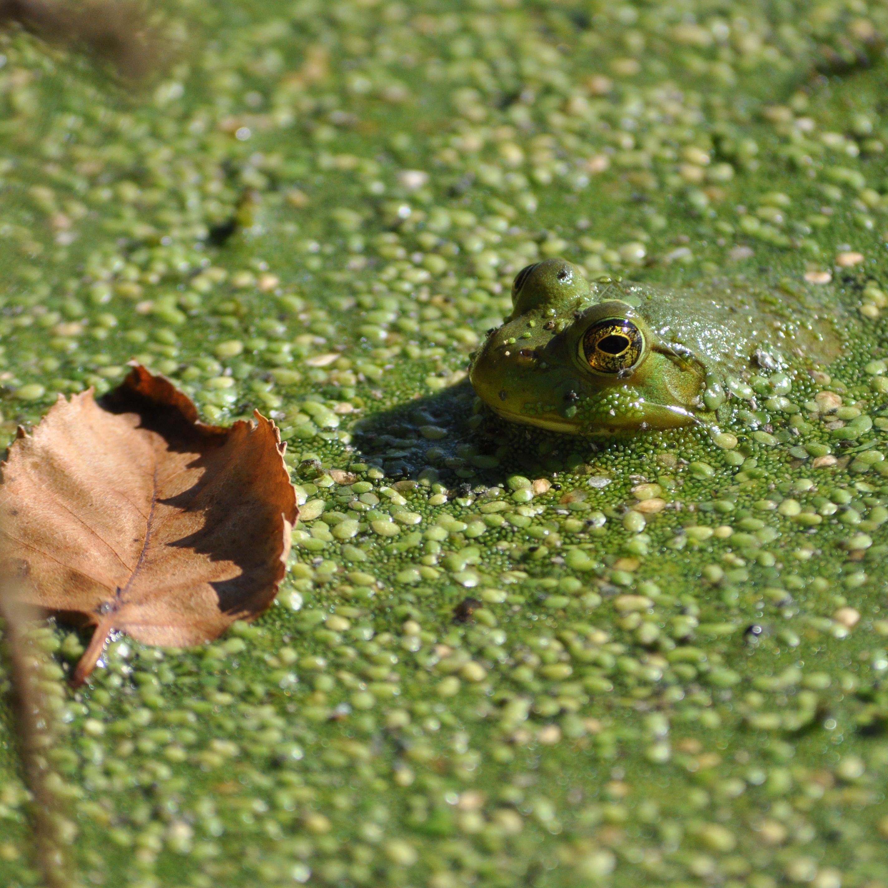 2012-09-01_fawnlake-frog
