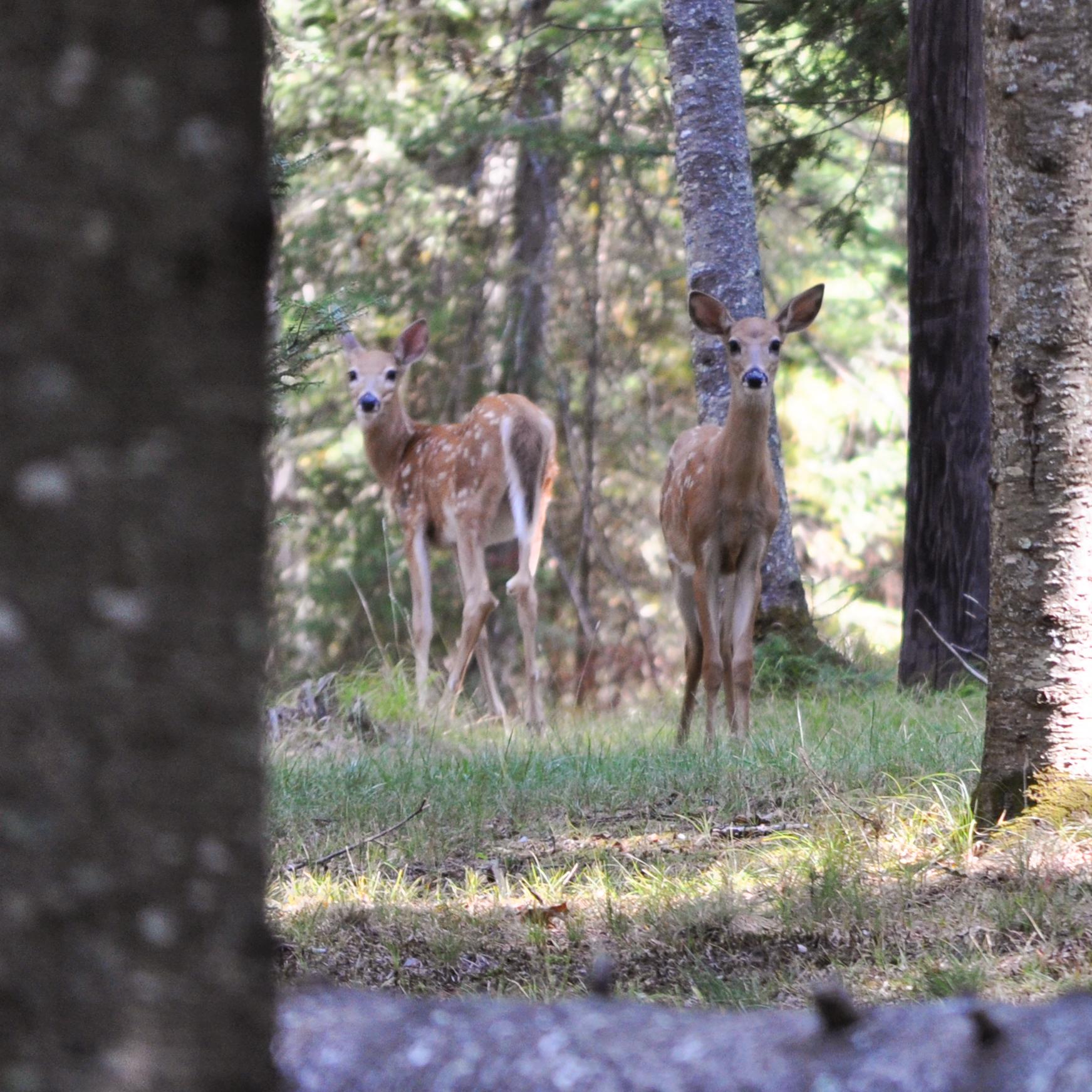 2012-09-02_fawnlake-deer