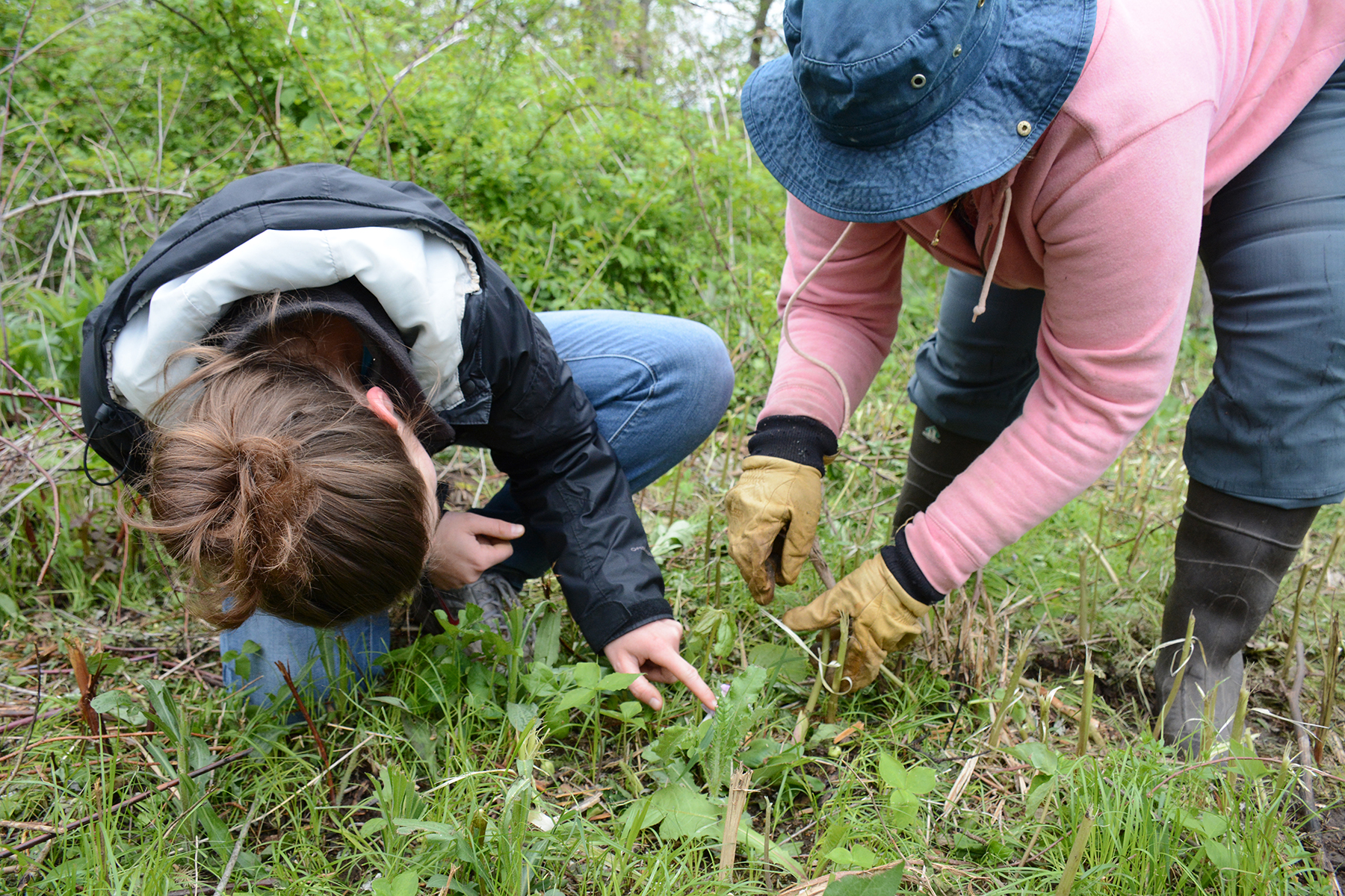 Volunteers Krysta Koralesky and Shelly Armstrong inspect an orchid along a path at Muehllehner Addition - Barneveld Prairie, Wis. May 14, 2016.