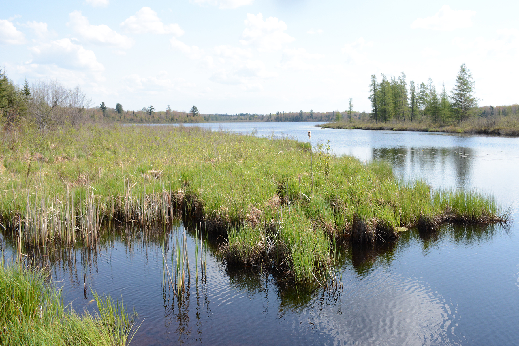 Nature Festival – Caroline Lake Preserve