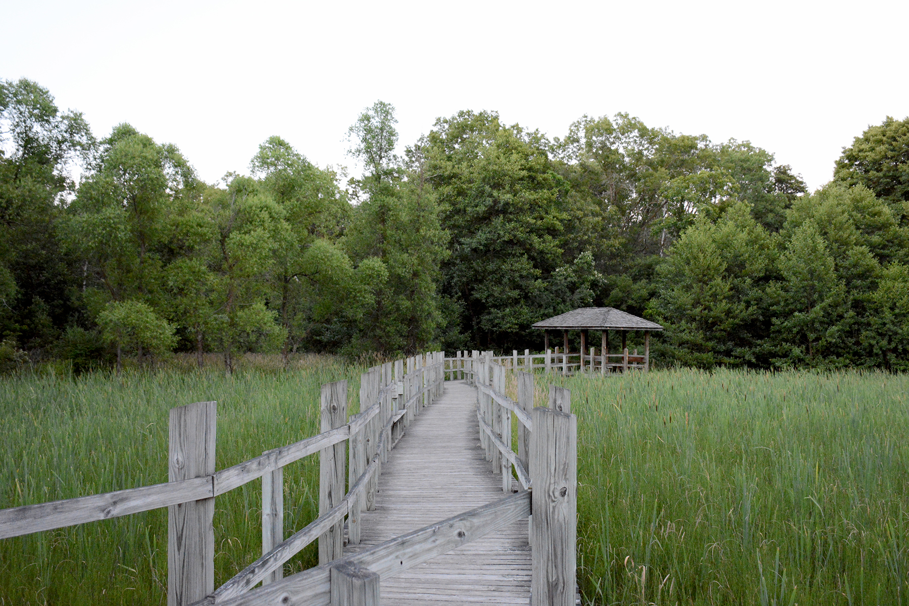 2016-06-20-nature-arboretum7