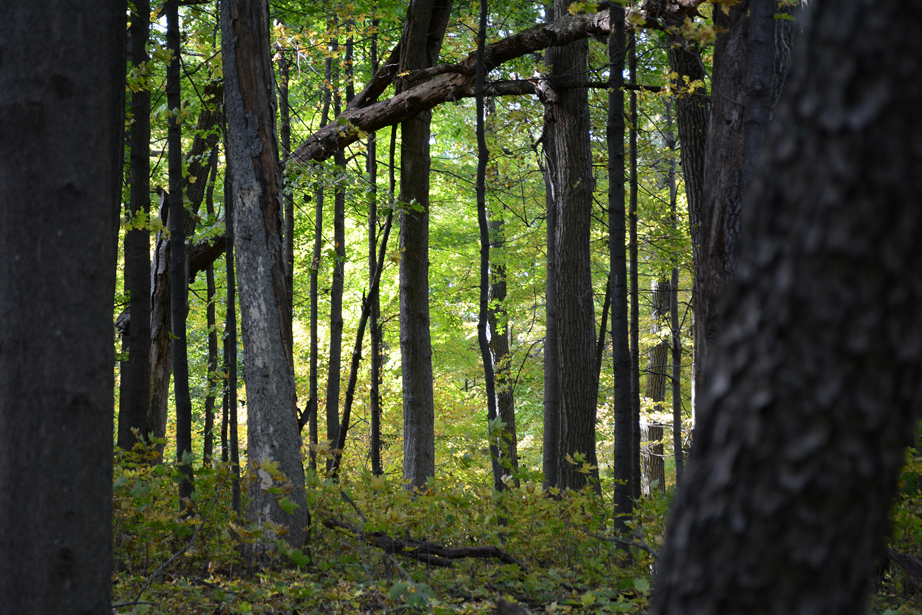 2016-10-14-arboretum-woods
