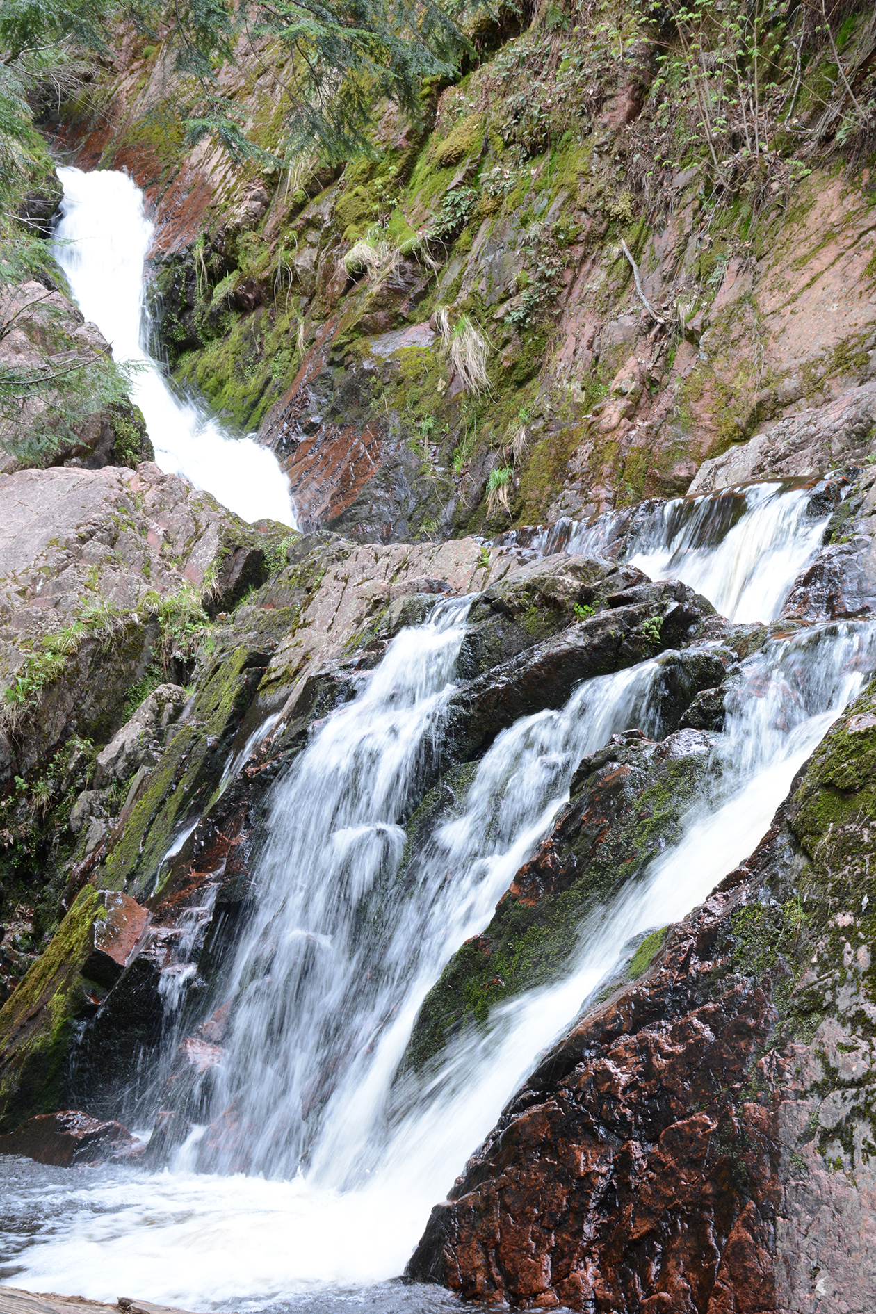 2015-05-14_bird_morganfalls-falls1