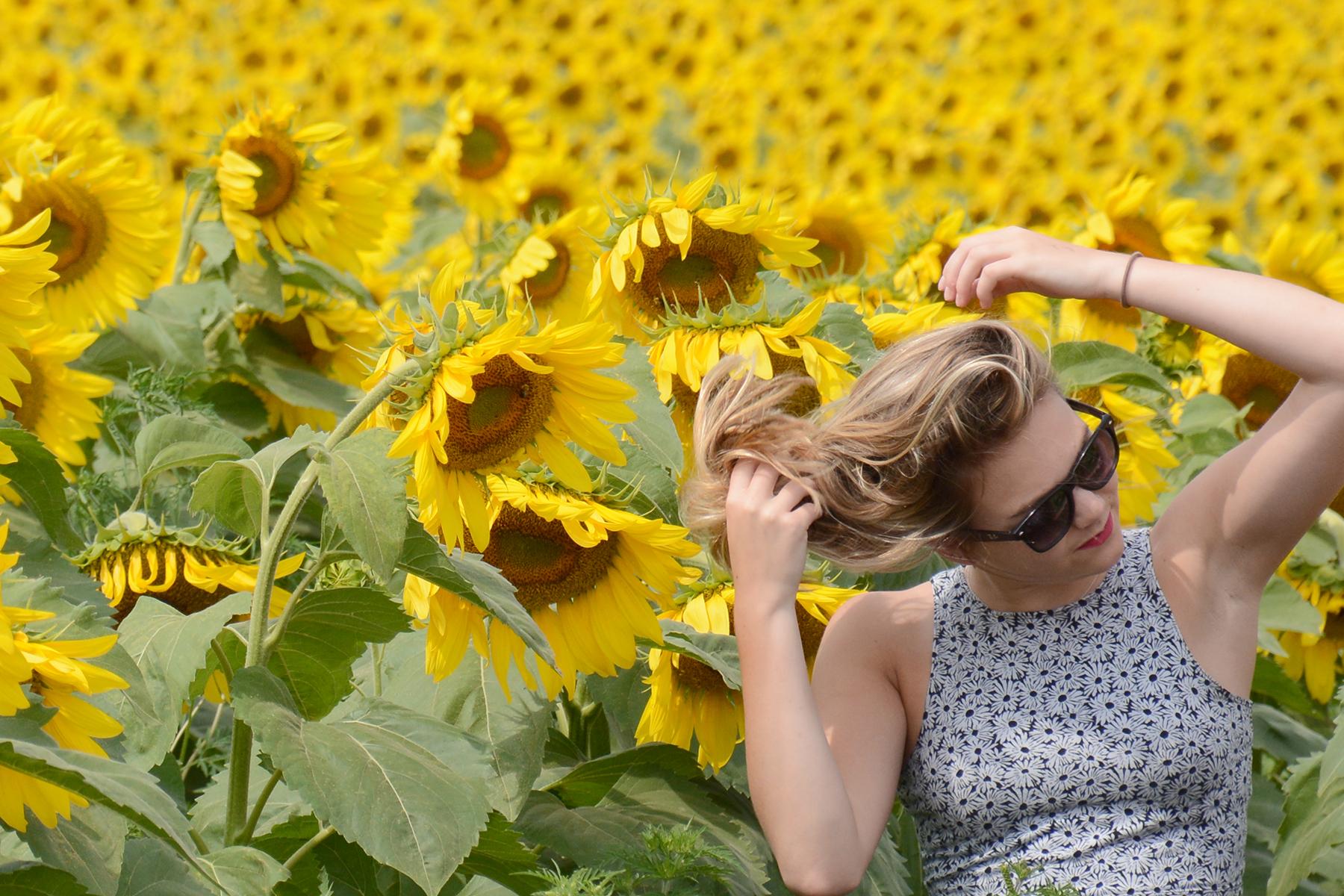2015-08-07_Sunflower9