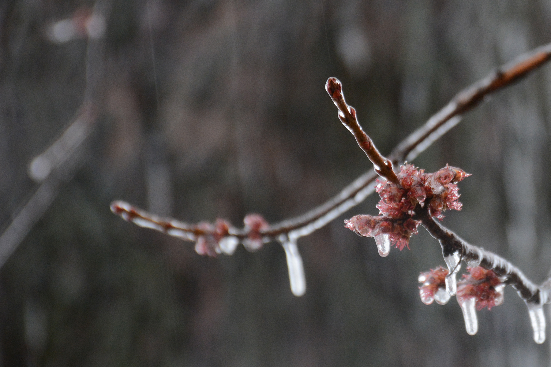 2016-03-24_backyard-ice-bud