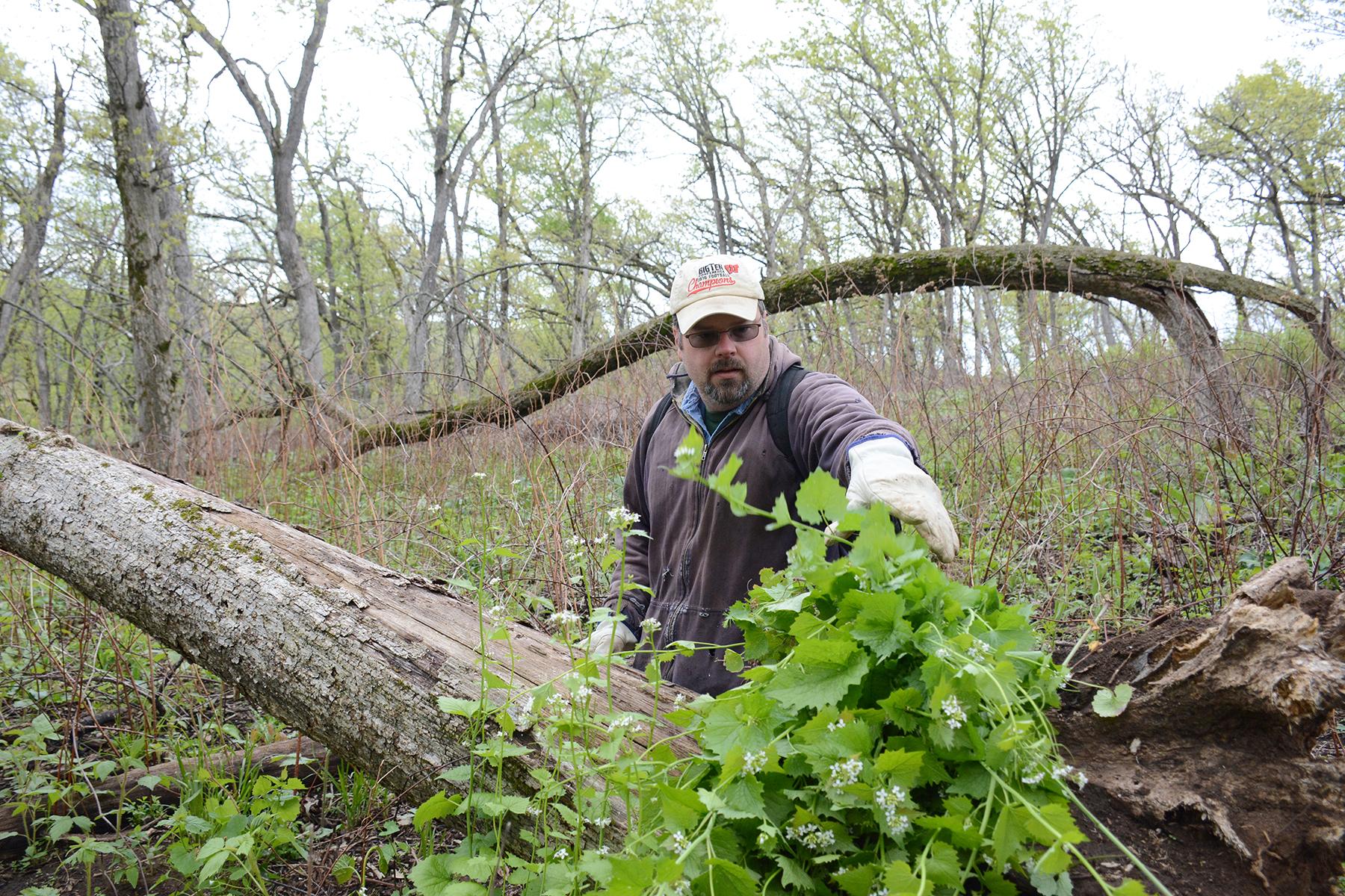 Jeff Meyers piles up invasive garlic mustard during a volunteer work day at Muehllehner Addition - Barneveld Prairie, Wis. May 14, 2016.