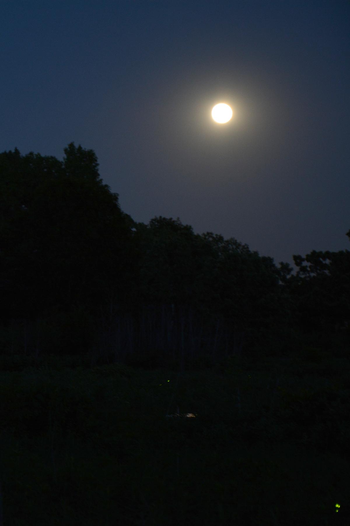 2016-06-20-nature-arboretum8
