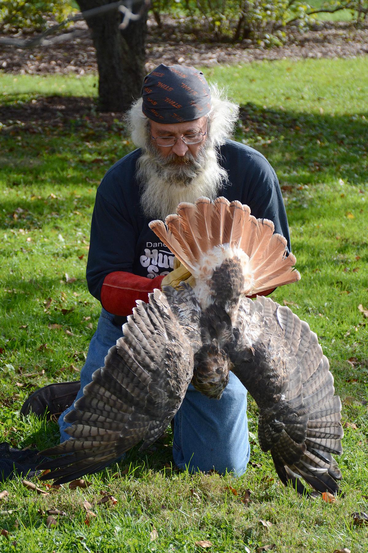 2016-10-14-arboretum-redtailedhawk6